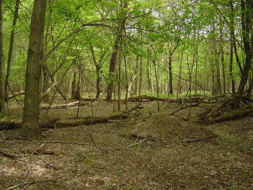 Springwoods2